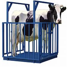 Весы для взвешивания животных ВСП4-АЖСО